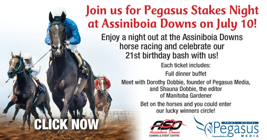 pegasus horse racing at assiniboia downs